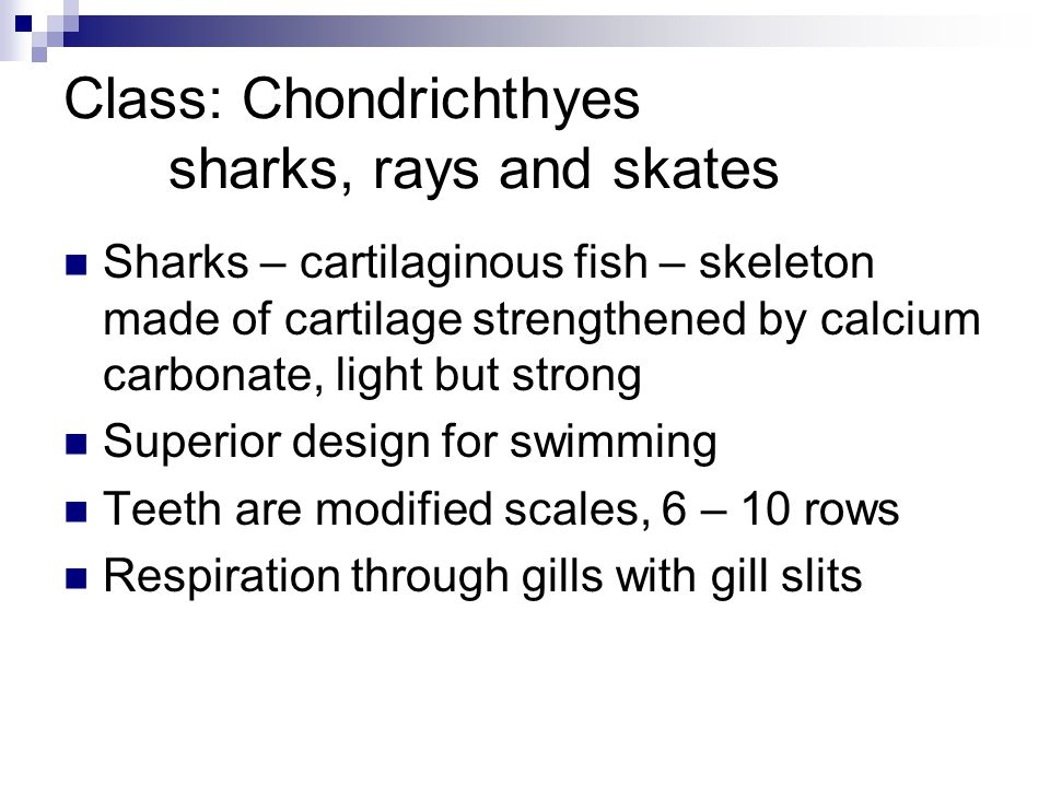Class: Chondrichthyes sharks, rays and skates