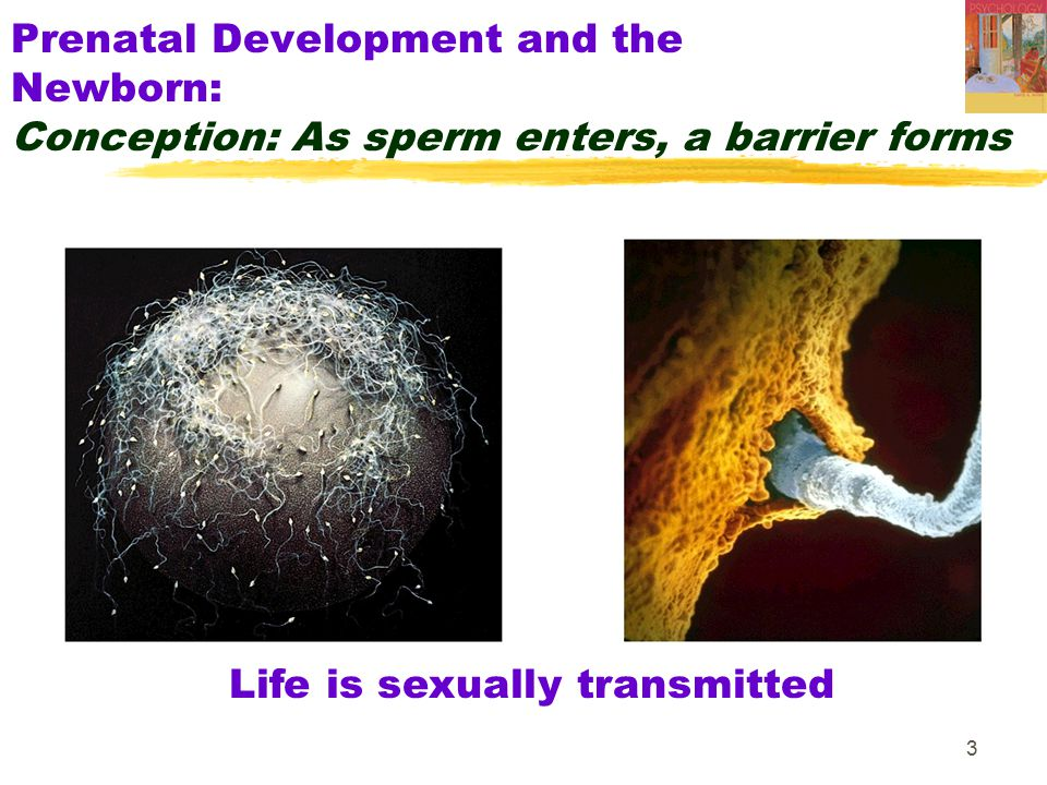 Life is sexually transmitted