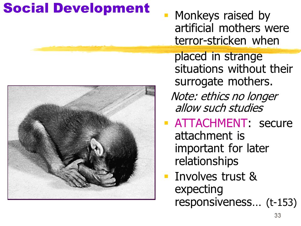 Social Development Monkeys raised by artificial mothers were terror-stricken when. placed in strange situations without their surrogate mothers.