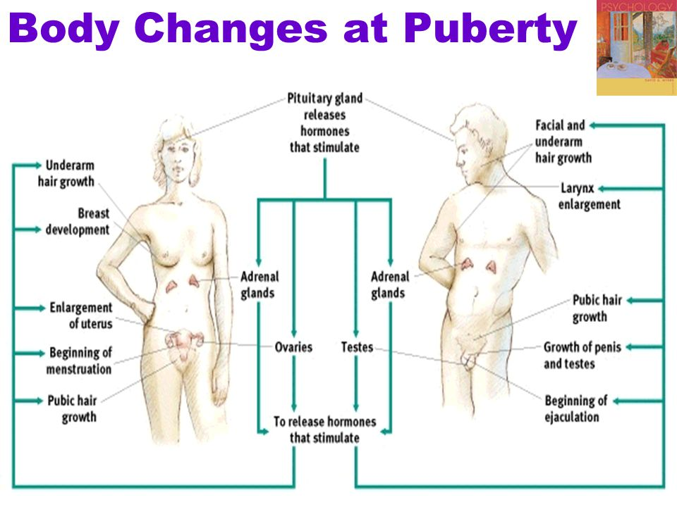 Body Changes at Puberty