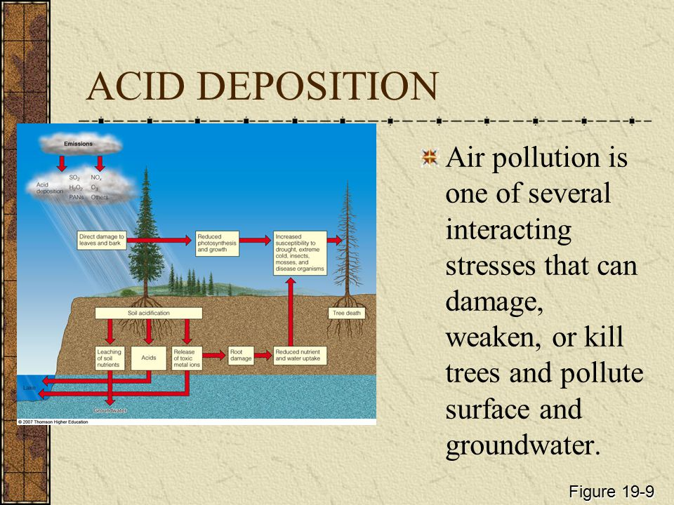 ACID DEPOSITION Air pollution is one of several interacting stresses that can damage, weaken, or kill trees and pollute surface and groundwater.