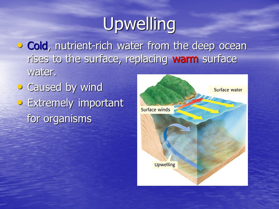 Upwelling Cold, nutrient-rich water from the deep ocean rises to the surface, replacing warm surface water.
