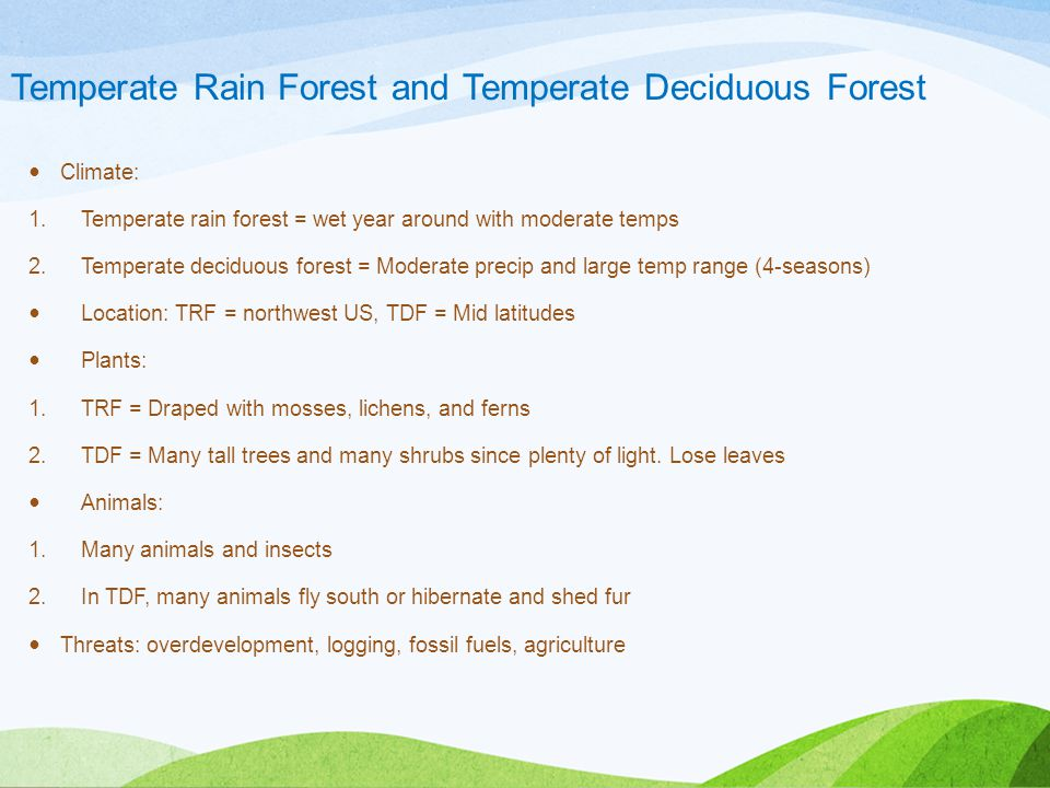 Temperate Rain Forest and Temperate Deciduous Forest