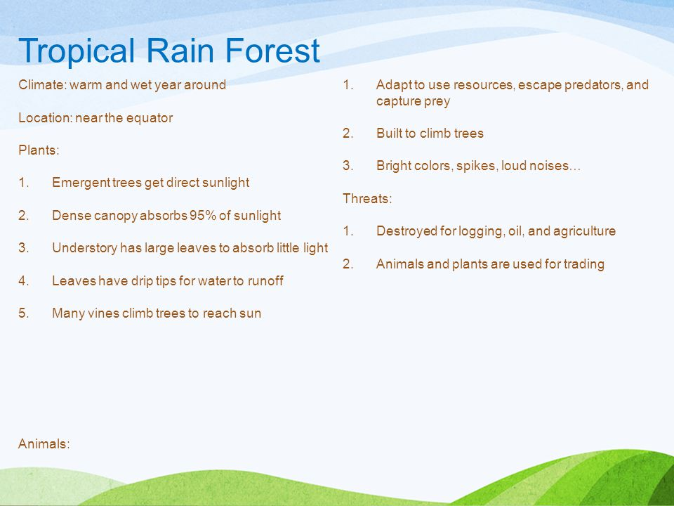 Tropical Rain Forest Climate: warm and wet year around Animals: