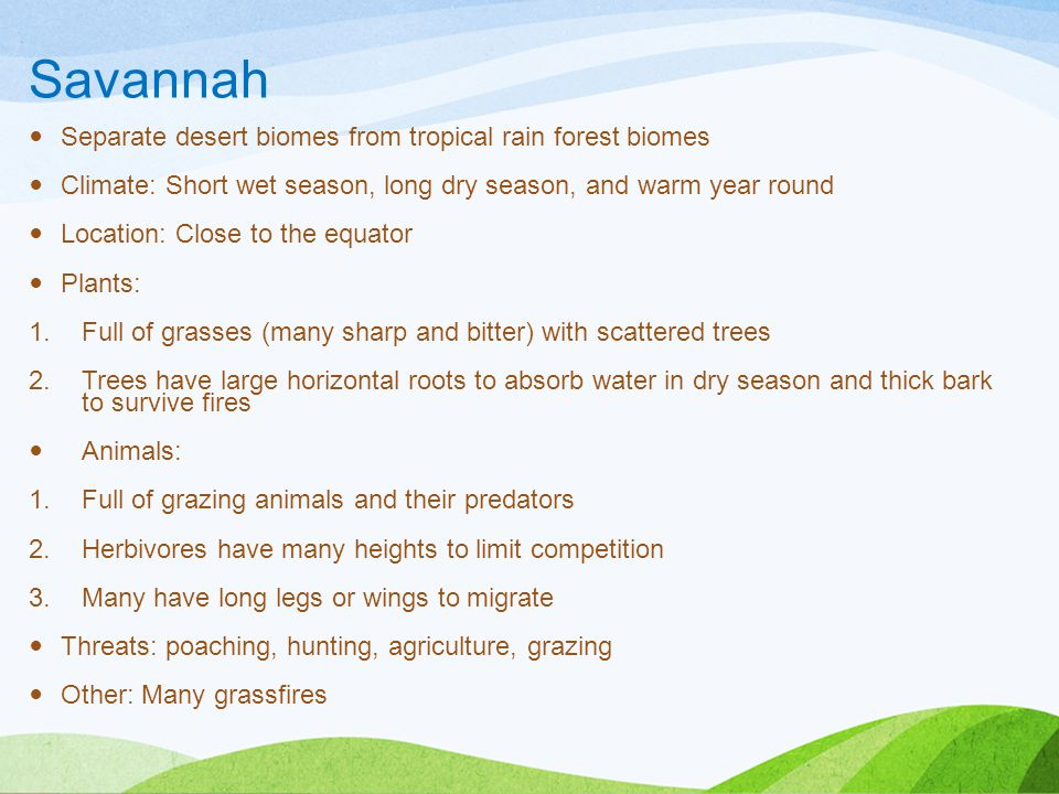 Savannah Separate desert biomes from tropical rain forest biomes