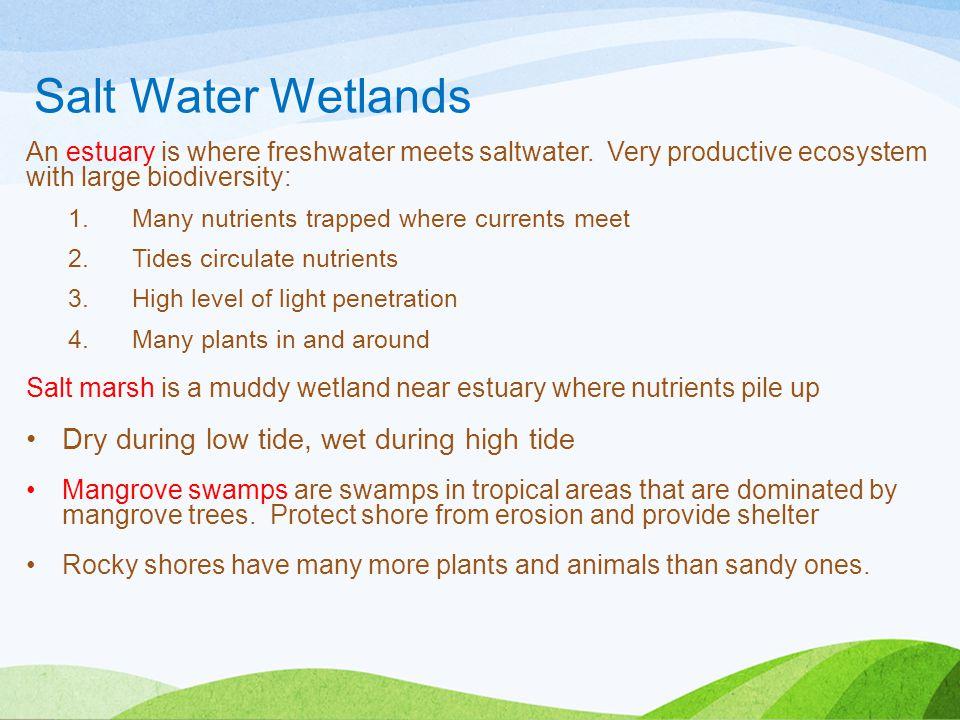 Salt Water Wetlands Dry during low tide, wet during high tide