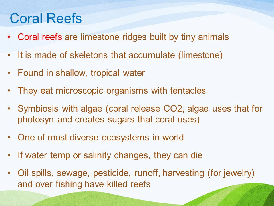 Coral Reefs Coral reefs are limestone ridges built by tiny animals