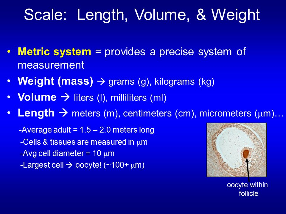 Scale: Length, Volume, & Weight