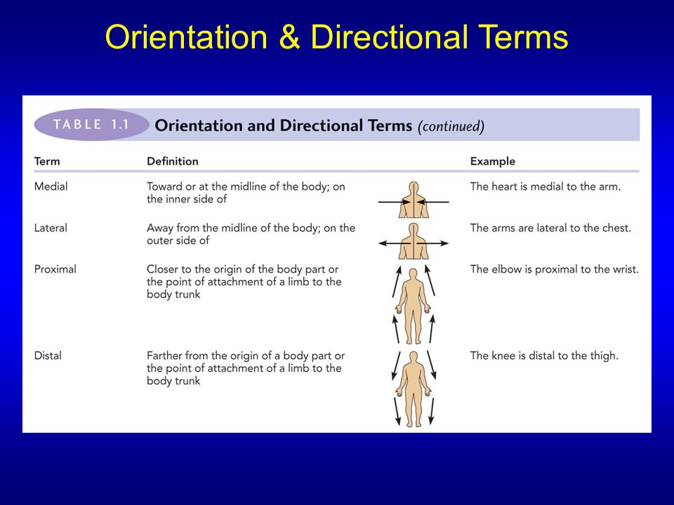 Orientation & Directional Terms