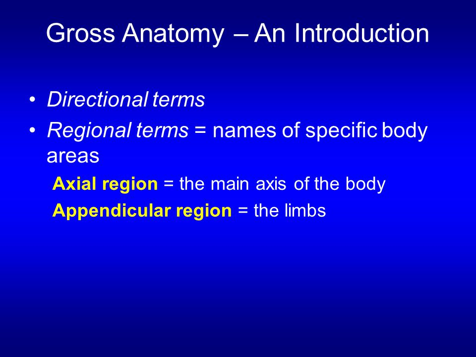 Gross Anatomy – An Introduction