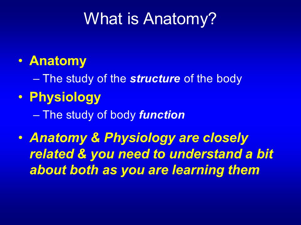 What is Anatomy Anatomy Physiology