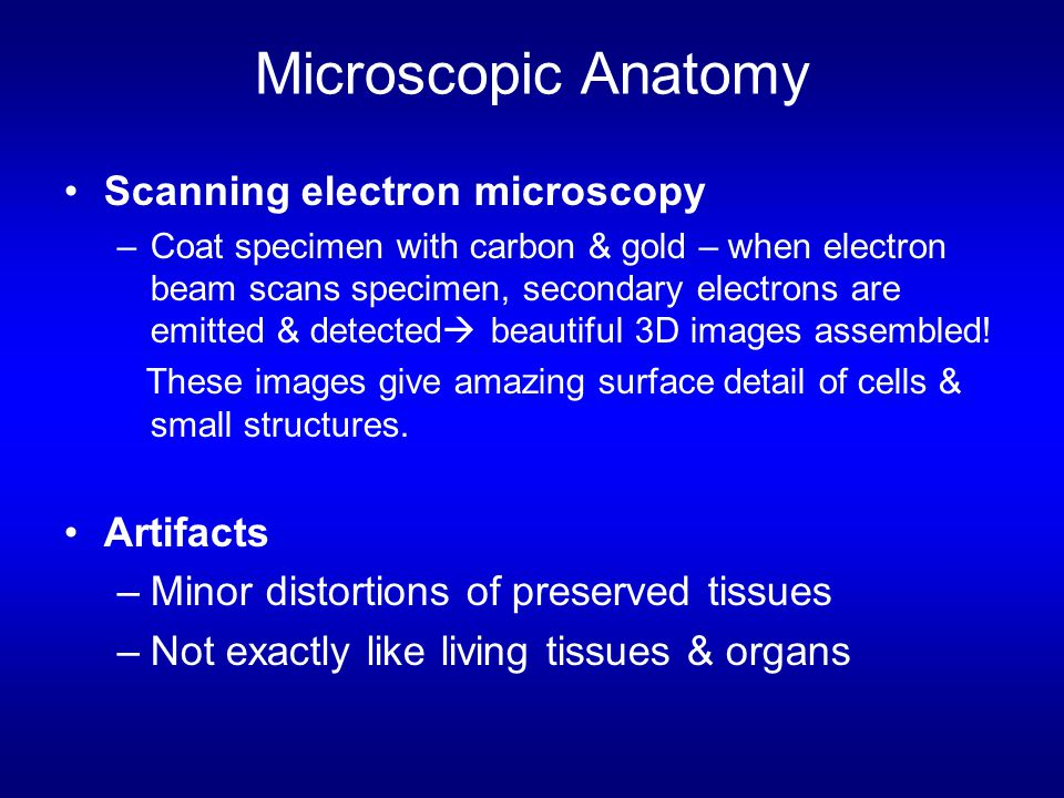 Microscopic Anatomy Scanning electron microscopy Artifacts