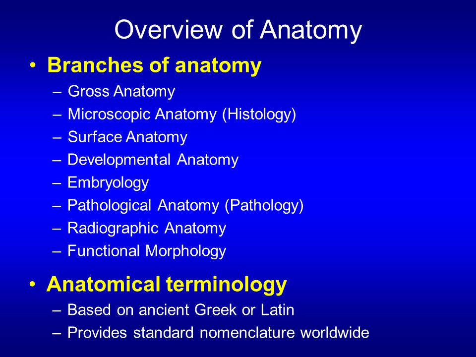 Overview of Anatomy Branches of anatomy Anatomical terminology