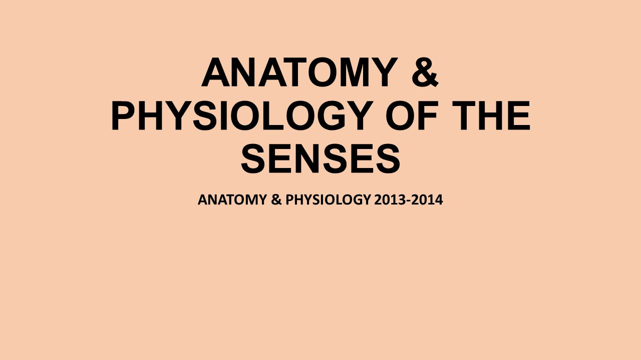 ANATOMY & PHYSIOLOGY OF THE SENSES