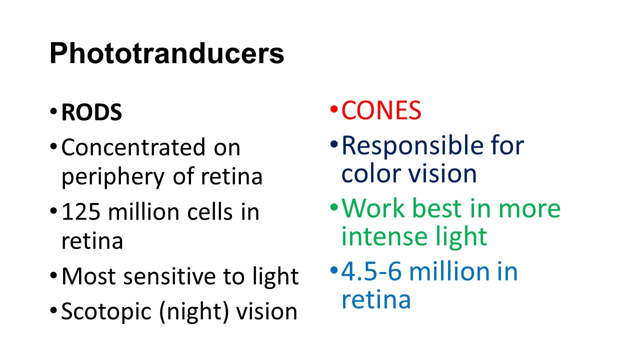 Responsible for color vision Work best in more intense light
