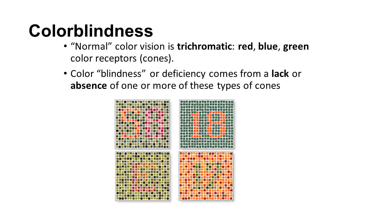 Colorblindness Normal color vision is trichromatic: red, blue, green color receptors (cones).