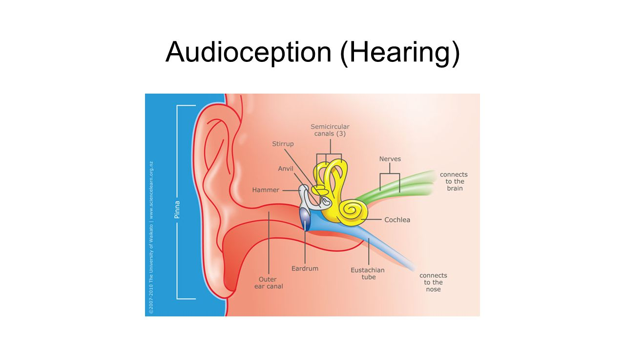 Audioception (Hearing)