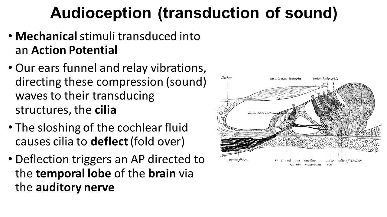 Audioception (transduction of sound)