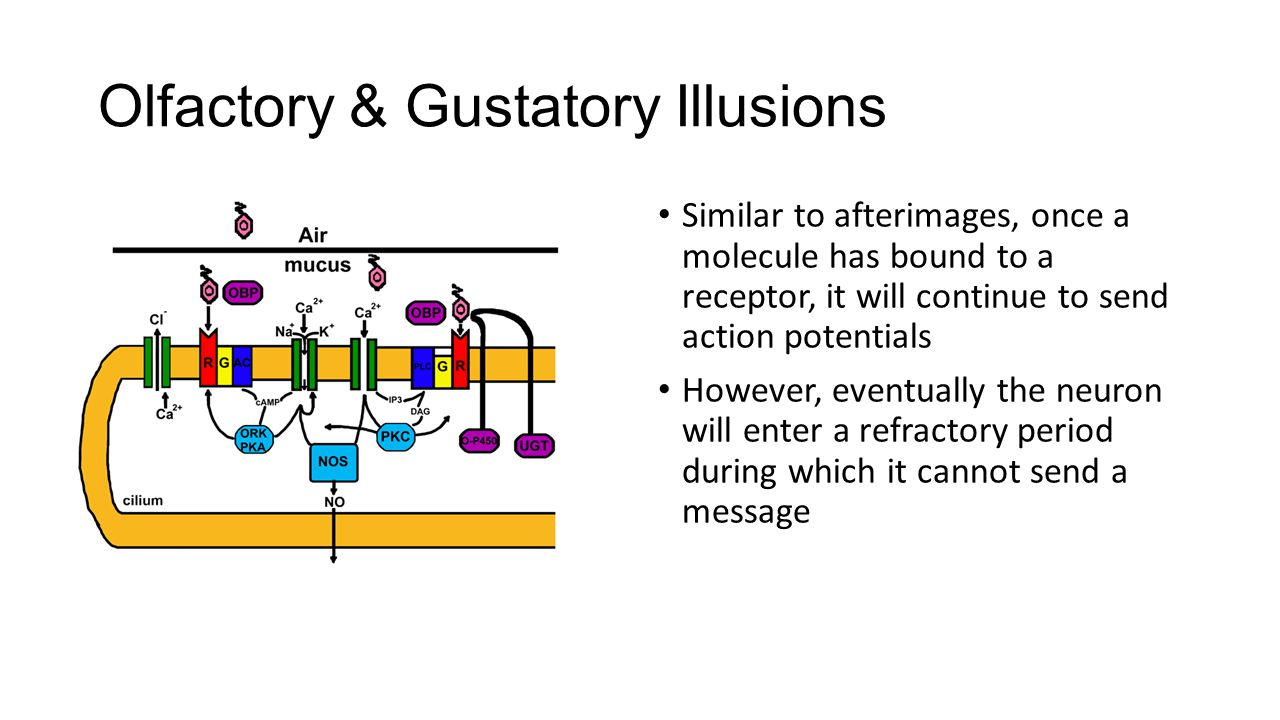 Olfactory & Gustatory Illusions