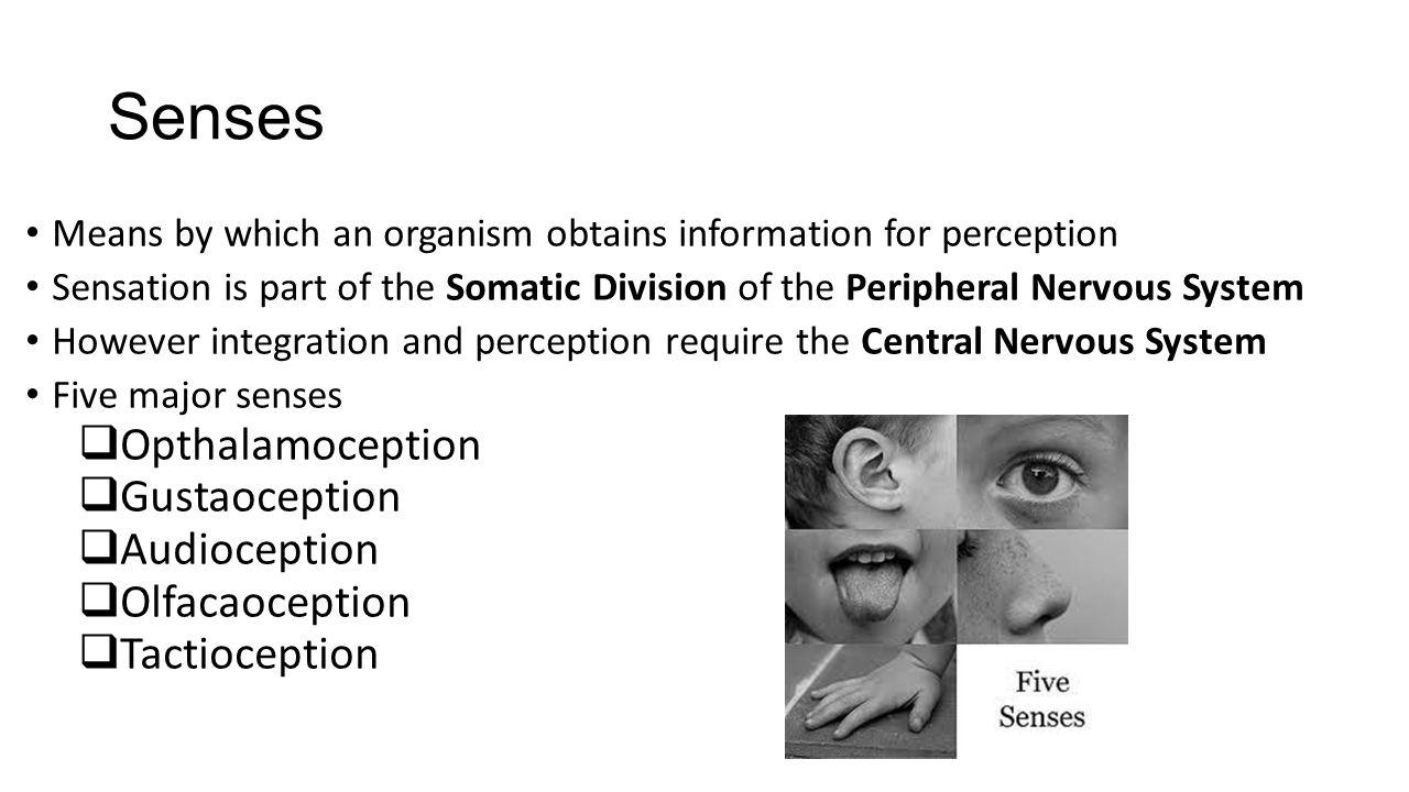 Senses Opthalamoception Gustaoception Audioception Olfacaoception