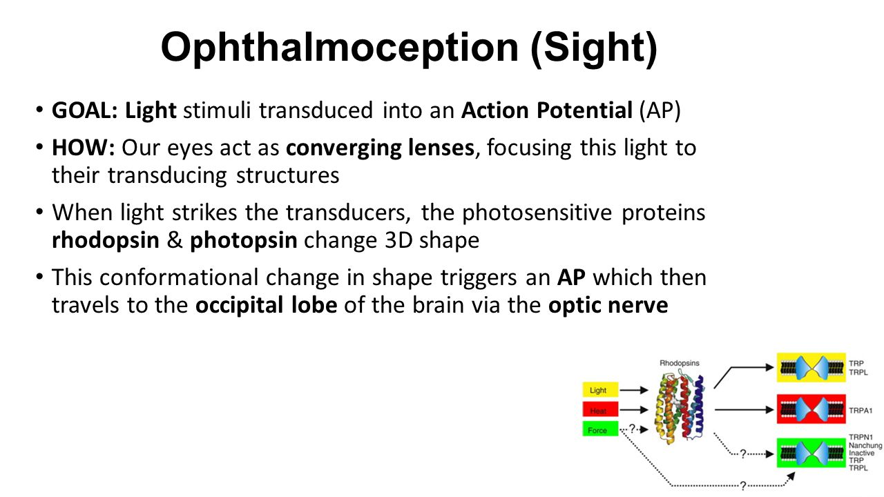 Ophthalmoception (Sight)
