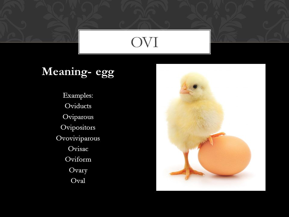 ovi Meaning- egg Examples: Oviducts Oviparous Ovipositors