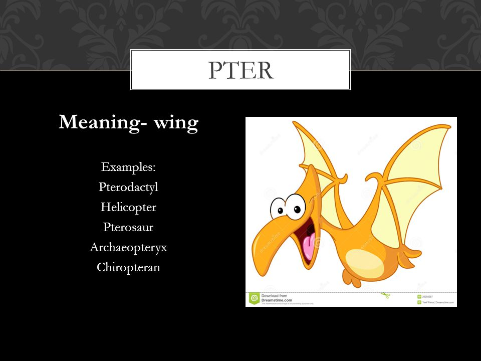 pter Meaning- wing Examples: Pterodactyl Helicopter Pterosaur
