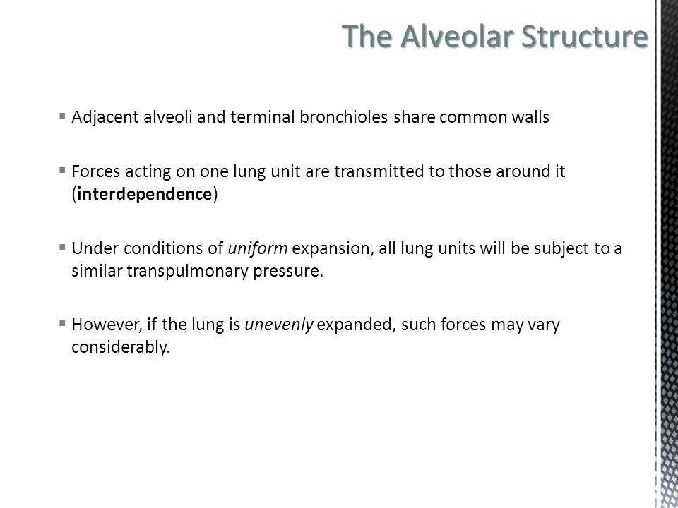 The Alveolar Structure