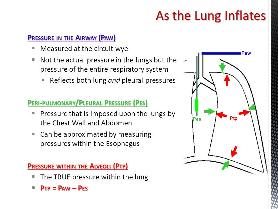 As the Lung Inflates Pressure in the Airway (Paw)