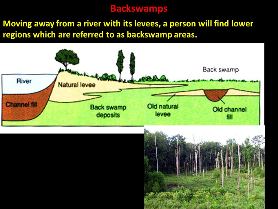 Backswamps Moving away from a river with its levees, a person will find lower regions which are referred to as backswamp areas.