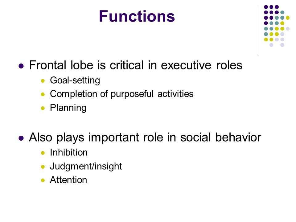 Functions Frontal lobe is critical in executive roles