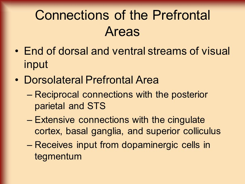 Connections of the Prefrontal Areas