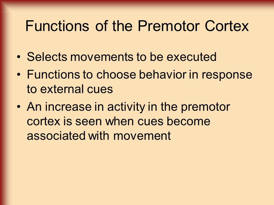 Functions of the Premotor Cortex