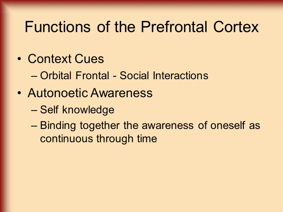 Functions of the Prefrontal Cortex