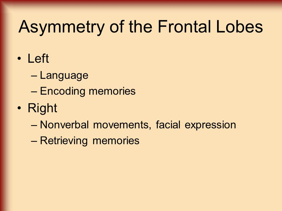 Asymmetry of the Frontal Lobes