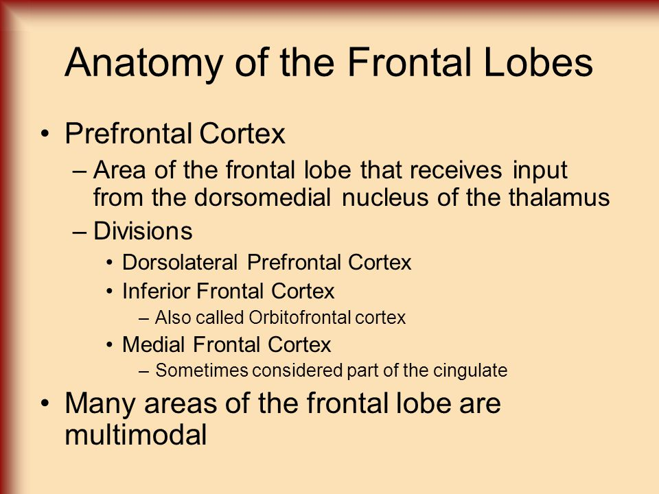Anatomy of the Frontal Lobes