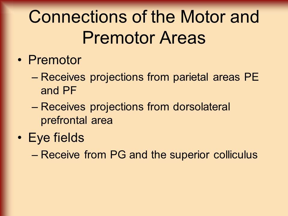 Connections of the Motor and Premotor Areas