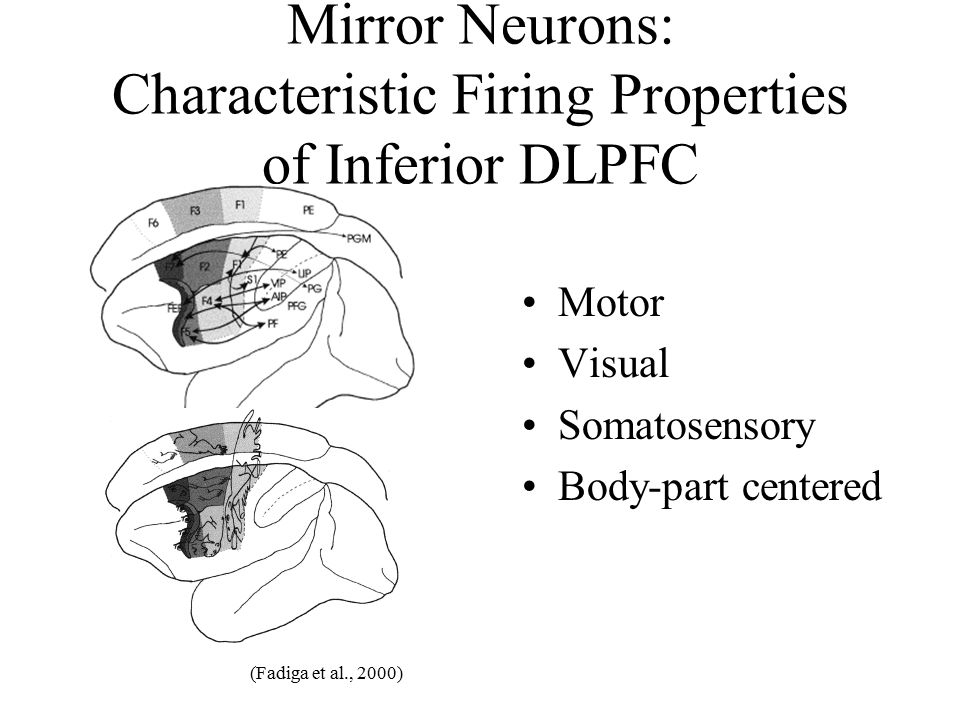 Mirror Neurons: Characteristic Firing Properties of Inferior DLPFC
