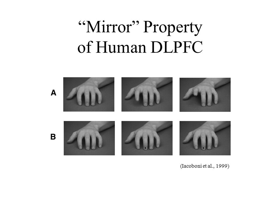 Mirror Property of Human DLPFC