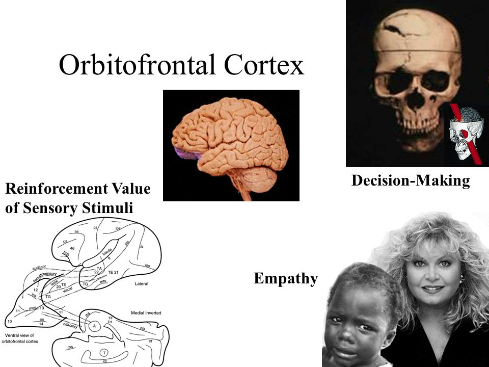 Orbitofrontal Cortex Decision-Making Reinforcement Value