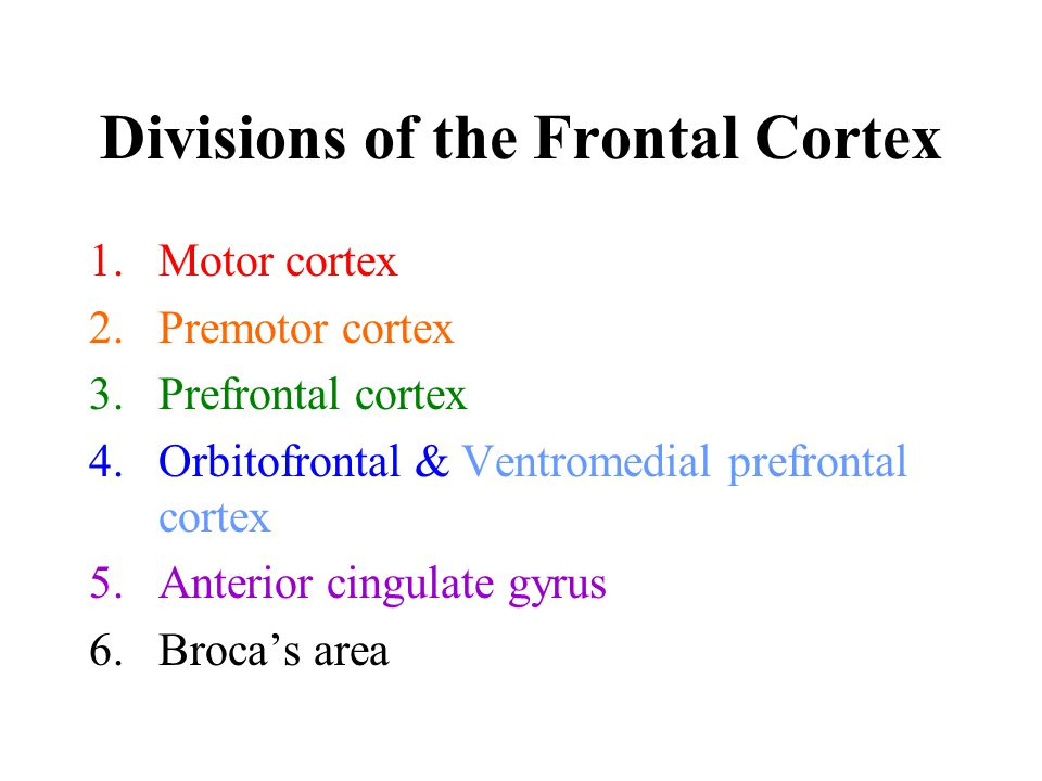 Divisions of the Frontal Cortex