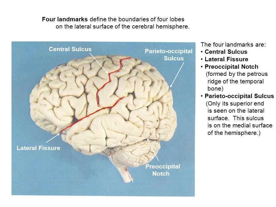 Four landmarks define the boundaries of four lobes