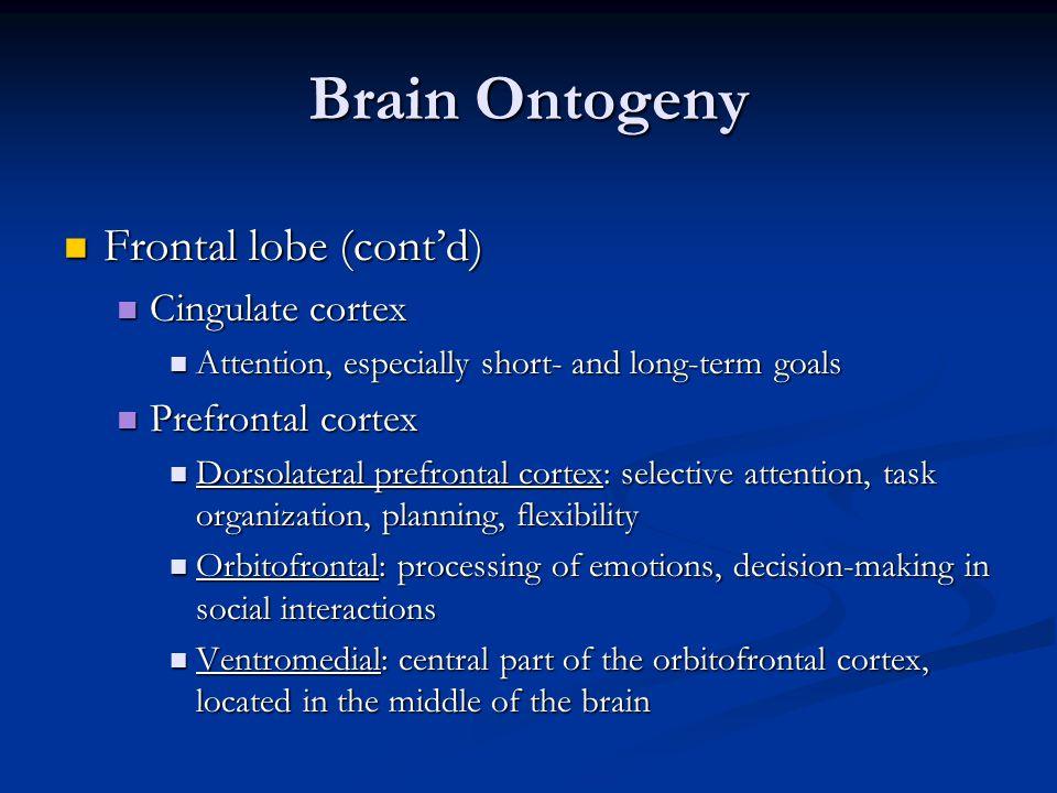 Brain Ontogeny Frontal lobe (cont'd) Cingulate cortex