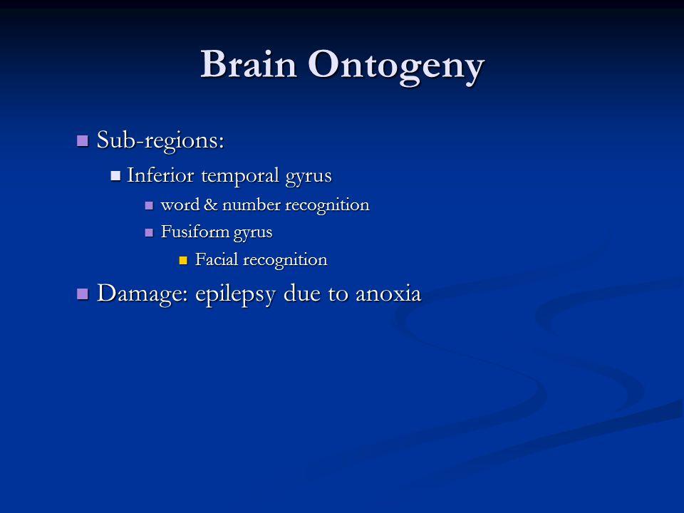 Brain Ontogeny Sub-regions: Damage: epilepsy due to anoxia