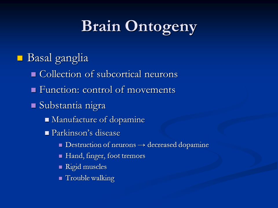 Brain Ontogeny Basal ganglia Collection of subcortical neurons