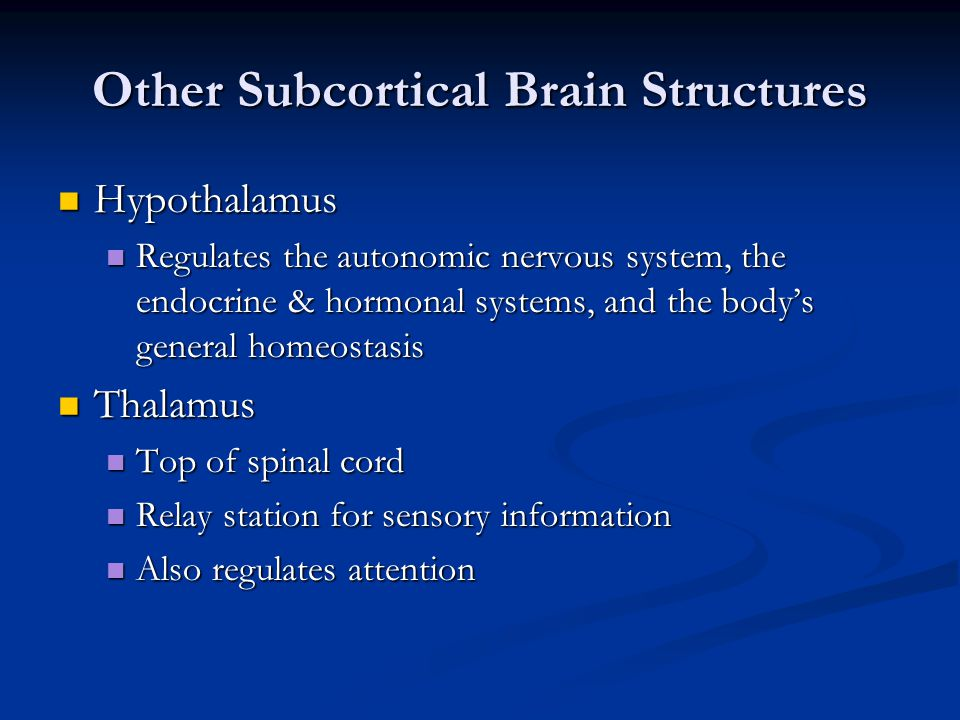 Other Subcortical Brain Structures