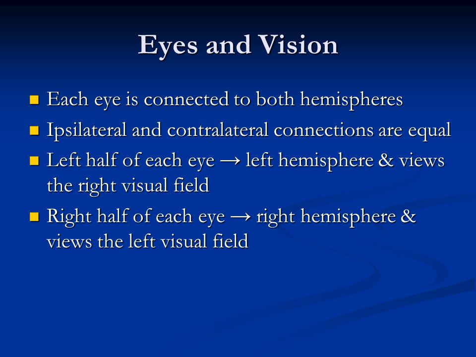 Eyes and Vision Each eye is connected to both hemispheres