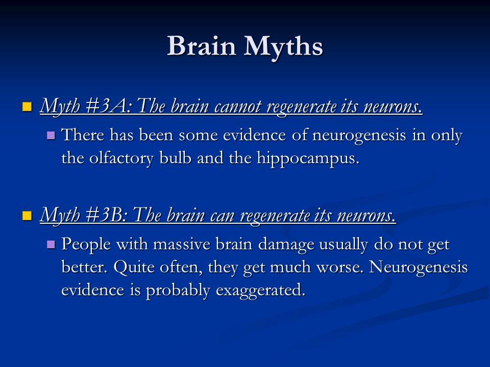 Brain Myths Myth #3A: The brain cannot regenerate its neurons.