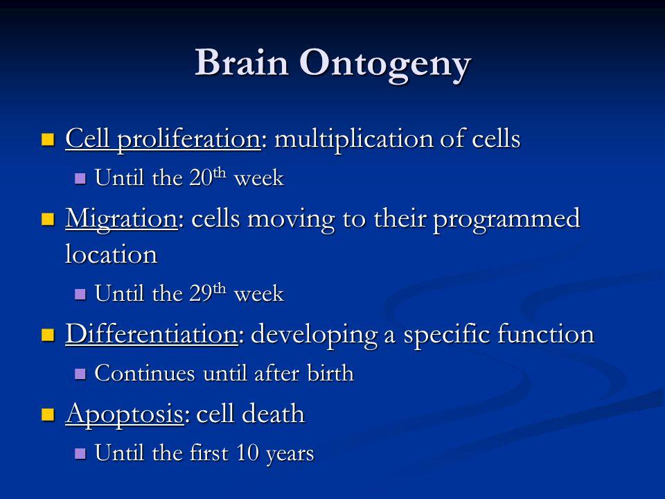 Brain Ontogeny Cell proliferation: multiplication of cells