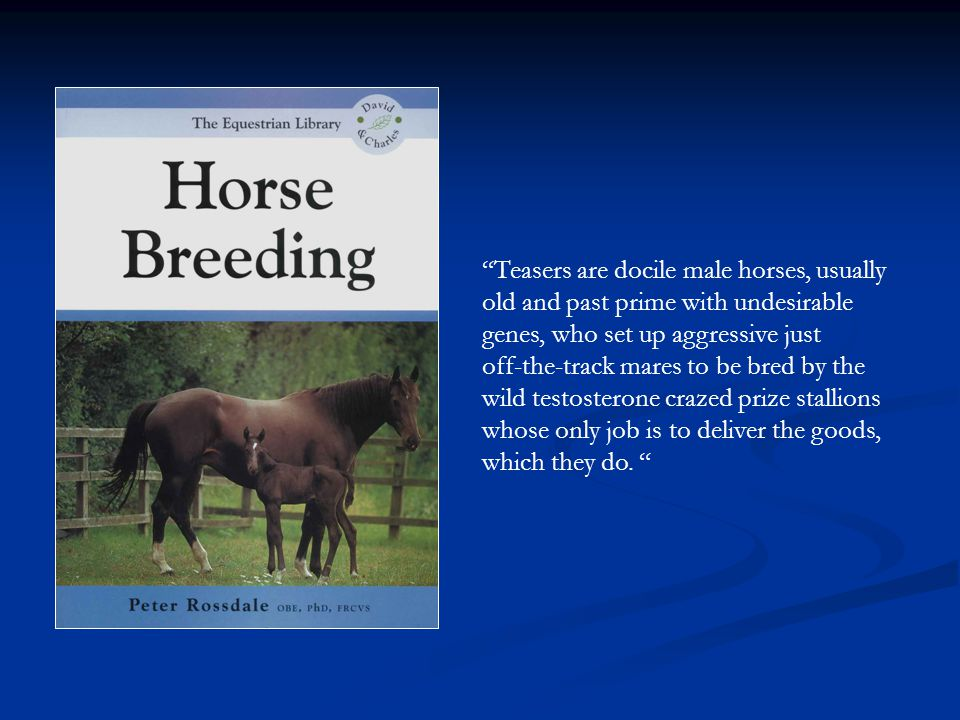 Teasers are docile male horses, usually